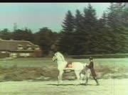 Pferdedressur in der Spanischen Hofreitschule Wien